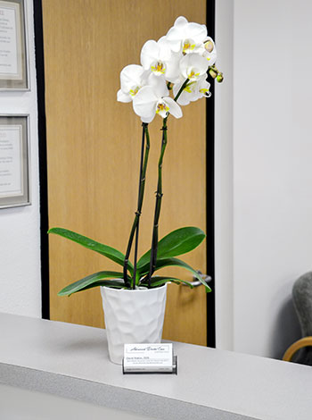 Flowers for patient comfort in our dental office